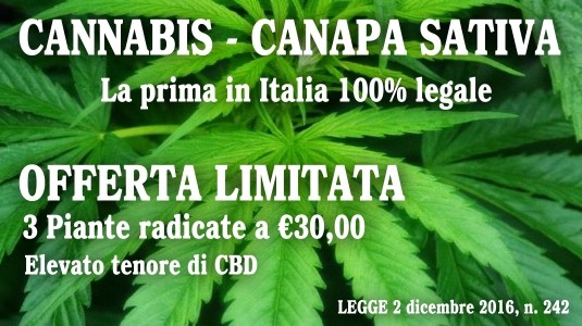 Cannabis - Canapa Sativa